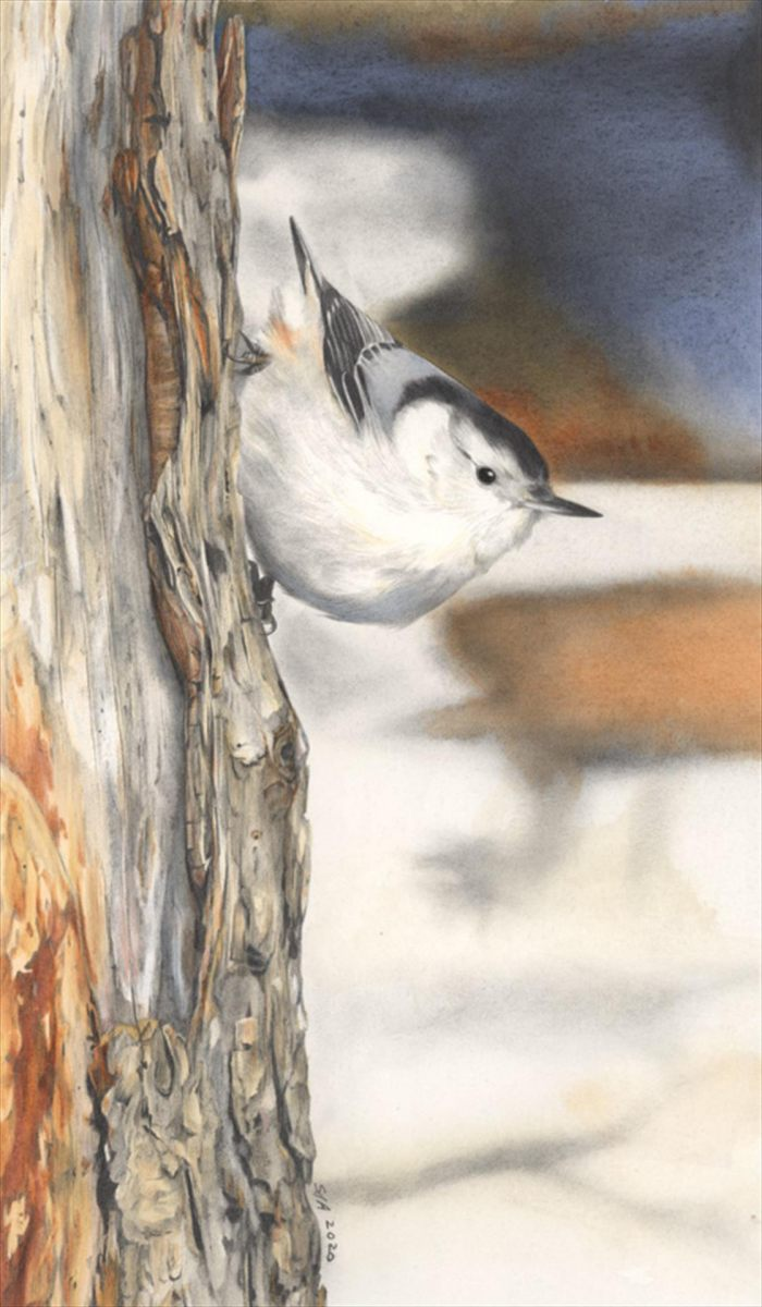 Adair-Sue-deLearie-The-Nuthatch-and-the-Old-Tree-Mixed-Media-12-x-17