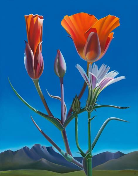 """After the Rain – Mariposa Lilies and Chicory, Catalina Mountains, Oil on canvas, 22"""" x 28"""""""