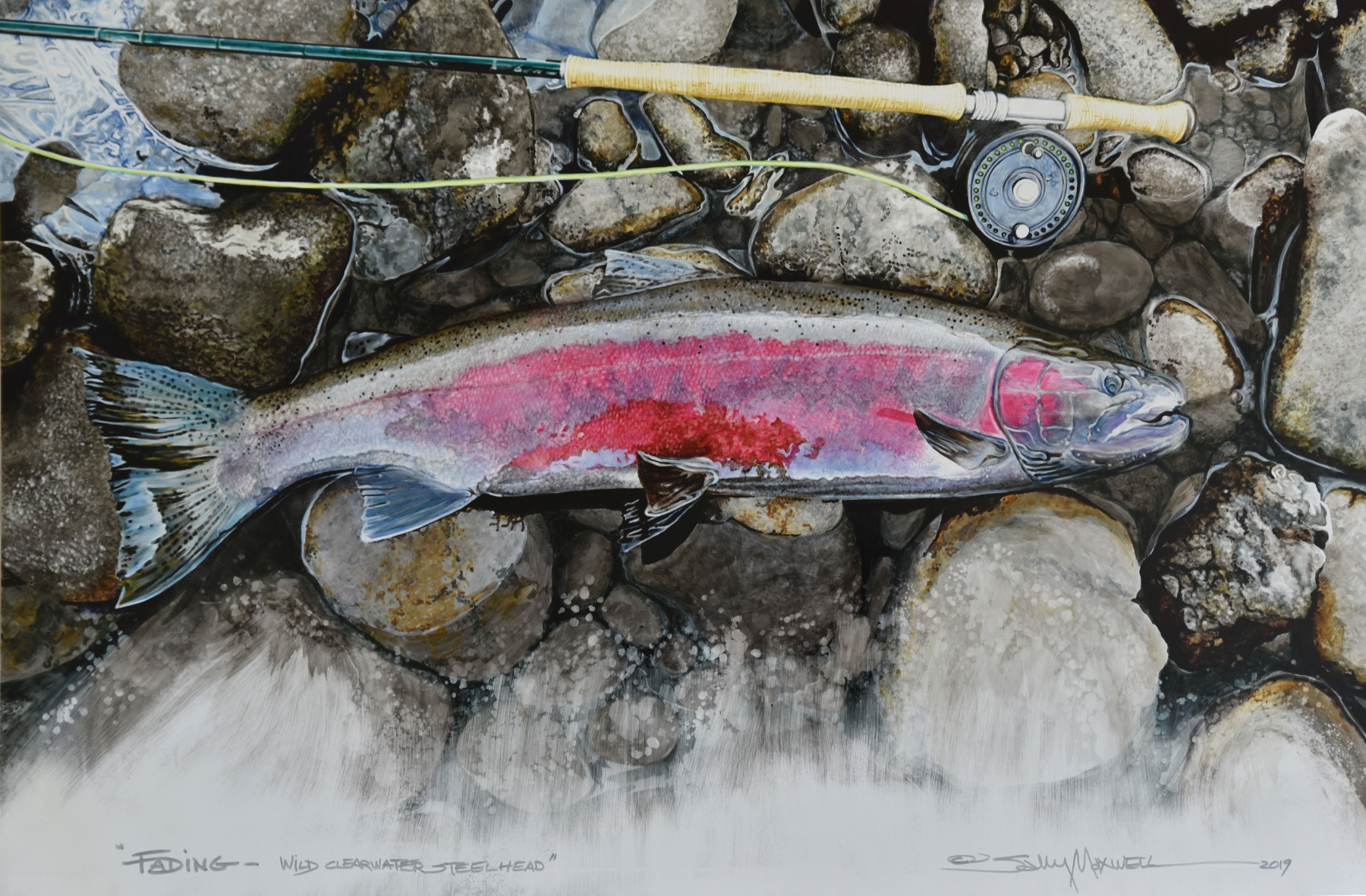 "Fading, Clearwater River Wild Cutthroat, Pitt Pens on Claybord, 24"" x 36"""